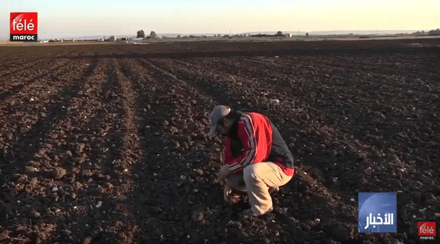 أخنوش: الموسم الفلاحي الحالي سيكون متوسطا بالنسبة لإنتاج الحبوب