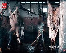 سوق اللحوم بالمغرب بين الجودة و الربح السريع