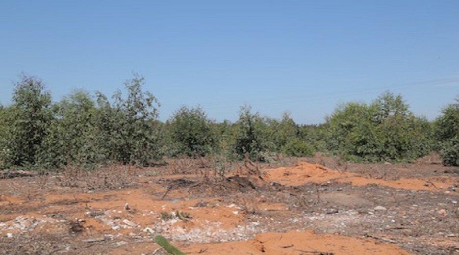 كارثة بيئية تواجه القنيطرة