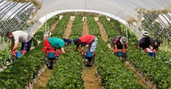 الحكومة الإسبانية ترخص ل 10 آلاف و400 عقد عمل جديد لمزارعين موسميين مغاربة